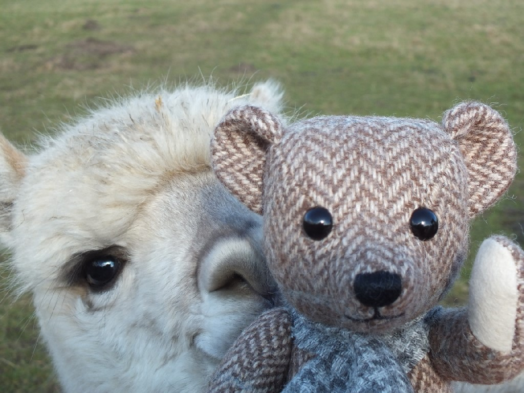 Sunrise the Alpaca with her new friend Ted